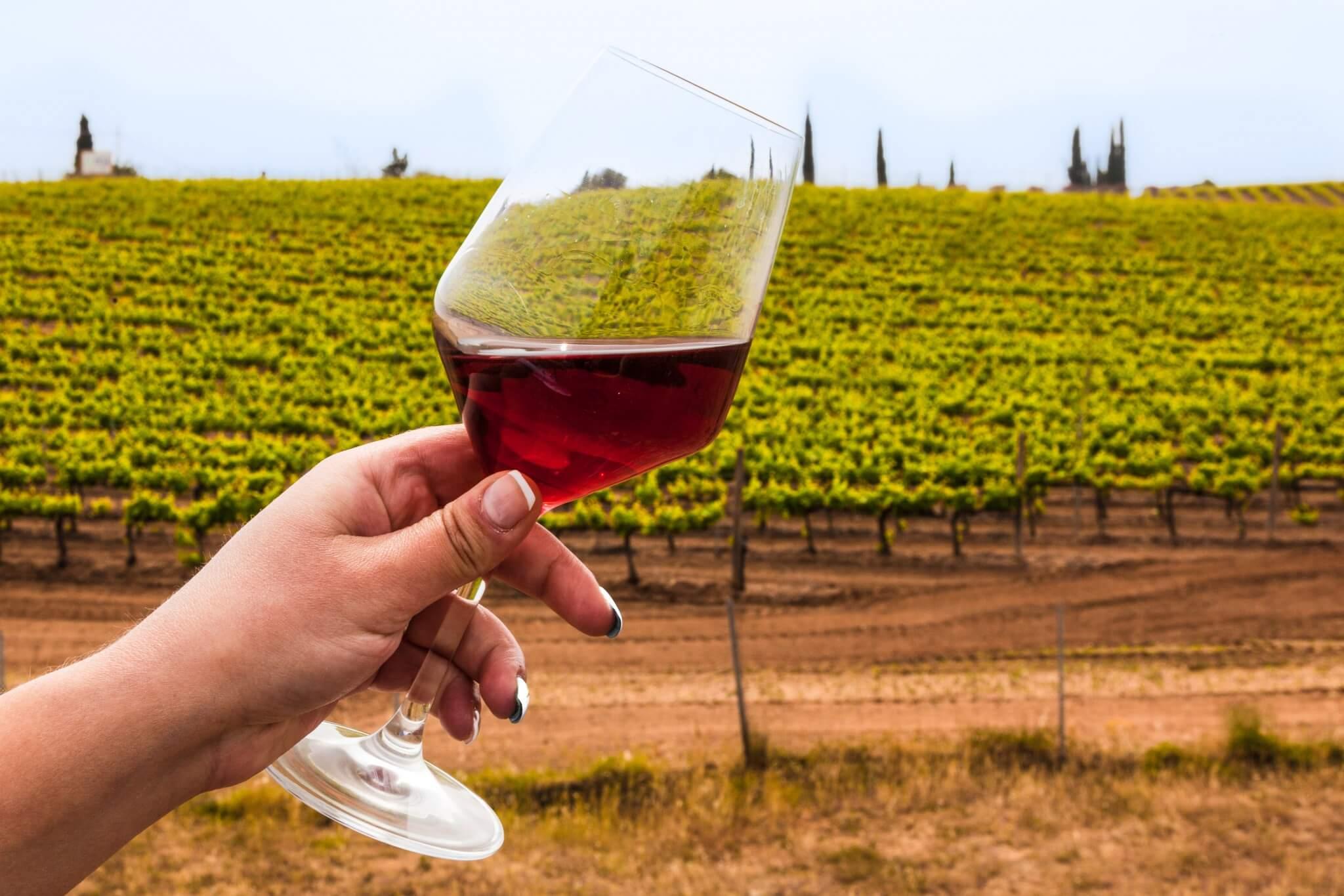 experience_extraordinary_sicilian_taste_winetasting